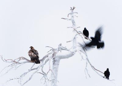 05_UNTERTHINER_EAGLE