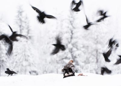 06_UNTERTHINER_EAGLE