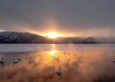 11-Swan_unterthiner