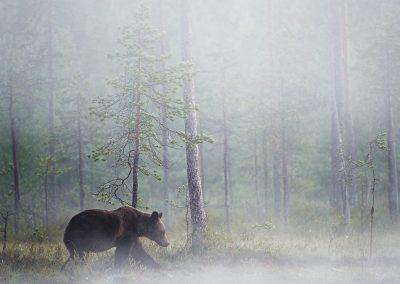 14_UNTERTHINER_BEAR