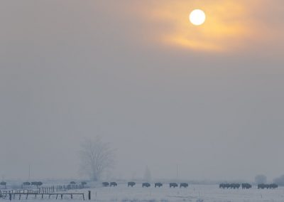 SUN-2009-02-22-080843-3