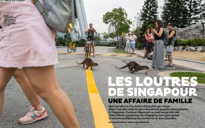 Otter story in Terre Sauvage