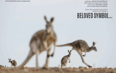 Kangaroos! A new National Geographic story