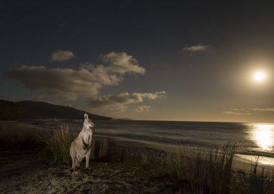 Kangaroo Controversy