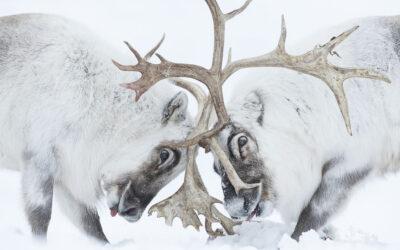 WINNER, Wildlife Photographer of the Year